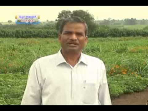 23 10 2014 mycoplasma management in sheep and goats dr m t manjunath and protected agriculture for s