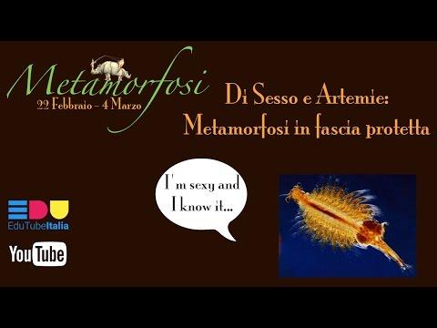 METAMORFOSI || Di Sesso e Artemie: Metamorfosi in fascia protetta