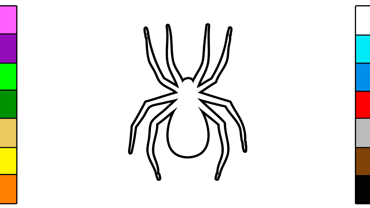 Colorful Spider Coloring Page For Children Youtube