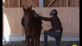 Gambar cover Come montare a cavallo: salire in sella in 6 modi diversi