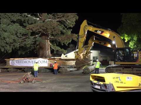 Giant Sequoia Move -- Night