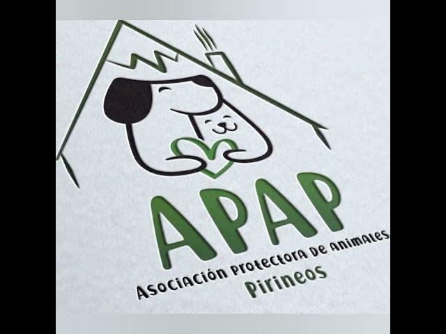 SOFI Y TOM gatitos de 2 meses en adopción en la protectora para animales abandonados de Jaca