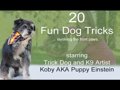 20 fun dog tricks involving the front paws
