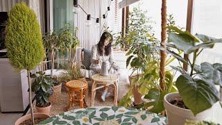 식물에 둘러싸여 있는 집🌳 | 율마 키우기 아코디언 감자, 문어 마리네이드 My cozy home with a little forest