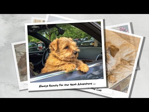 Norfolk Terrier Hank and the Places We Used To Go