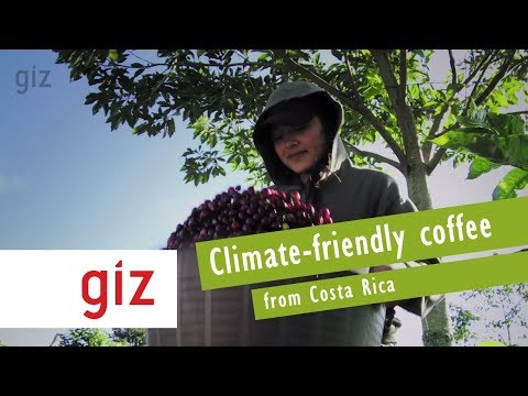 #GIZworks Costa Rica: Climate-friendly Coffee