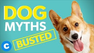10 Dog Myths Busted