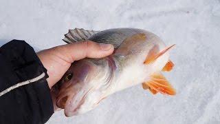 Окунь на балансир зимой| Активный клев в глухозимье | Зимняя рыбалка на балансир