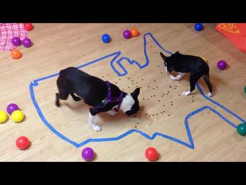 dogs-eat-treats---usa-map-maze