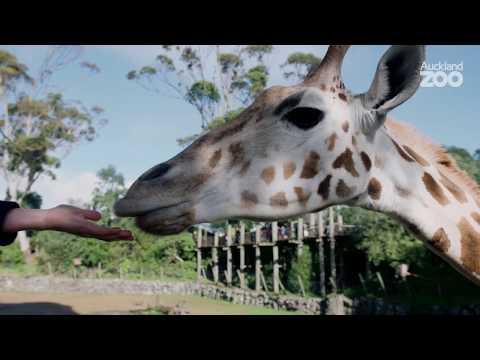 Giraffe Conservation Foundation