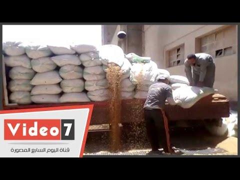 تعرف على شروط استلام القمح من المزارعين  - 06:21-2017 / 4 / 20