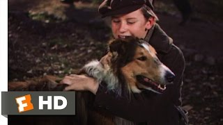 Lassie Come Home (10/10) Movie CLIP - My Lassie Come Home (1943) HD