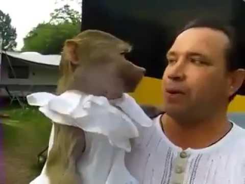 kumpulan video lucu Monyet nyanyi bareng