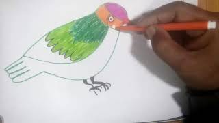 How to Draw Bird for Kids | Bird Drawing Coloring