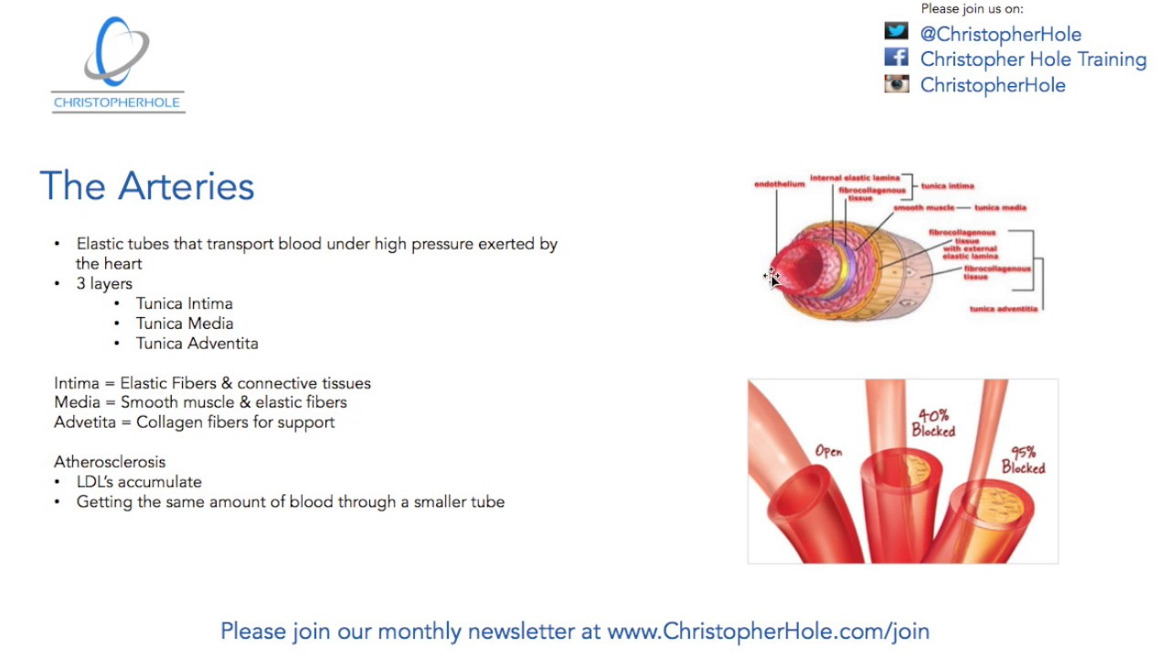 Anatomy of high blood pressure - YouTube