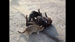 Кормление котов и кошек Владивосток 19.1.19 Дмитриев Дмитрий