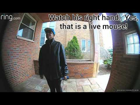 Security surveillance Ring camera compilation video catching thieves breaking in and/or stealing
