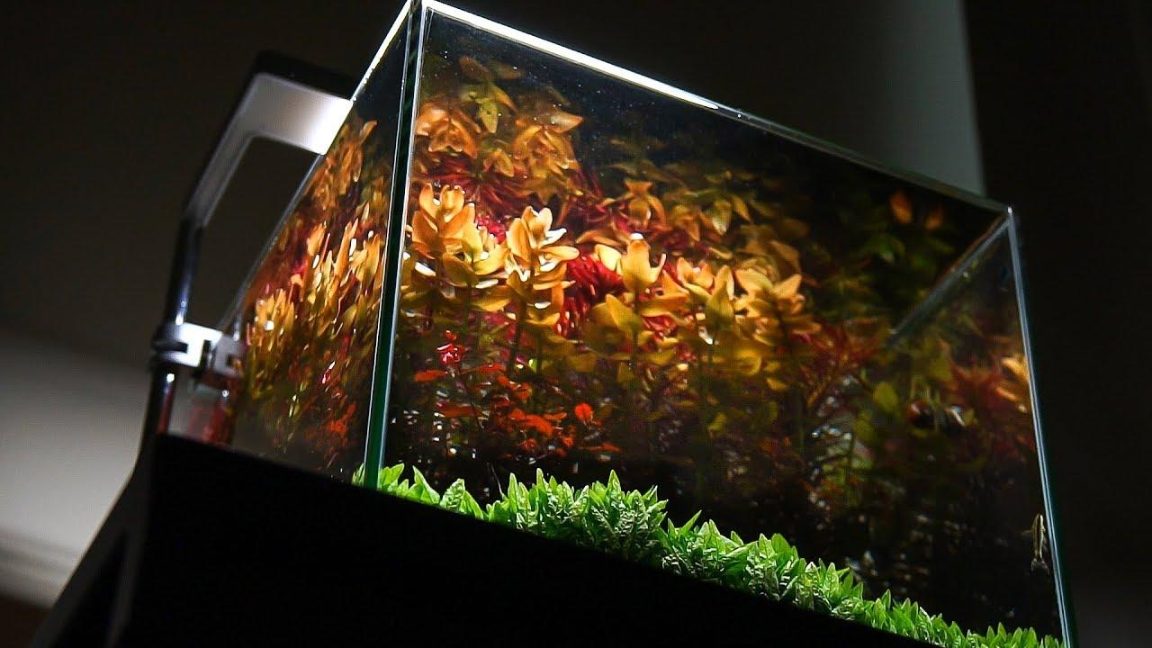 Design Aquarium Kast : Nano aquarium last view before trimming plants and redesign