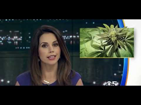 Marijuana - Environmental Devastation