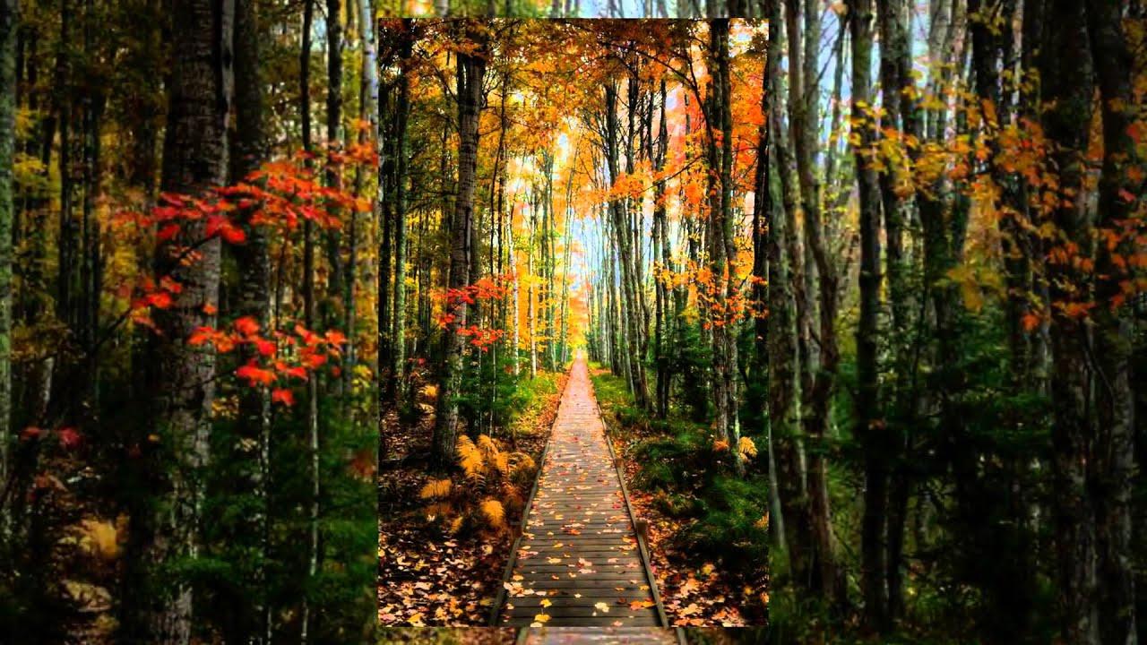 Wanderlust travels scenes of fall autumn in new - Pics of fall scenes ...