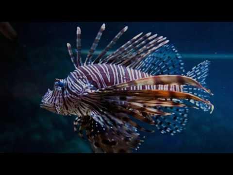 Ядовитые рыбы (рассказывает океанолог Дмитрий Астахов)