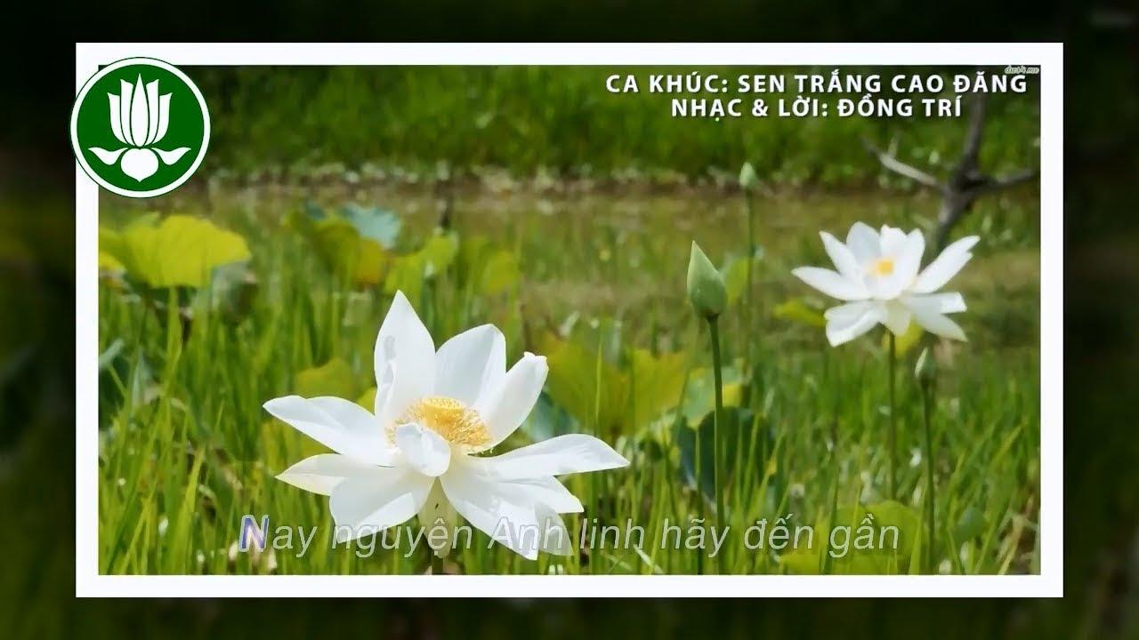 ♫ Sen Trắng cao đăng – Nhạc tưởng niệm trong Gia Đình Phật Tử