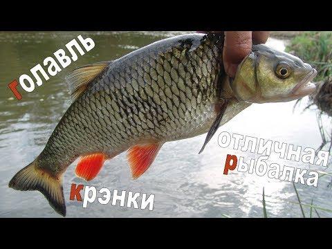 Голавль. Крэнки. Отличная рыбалка.