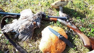 Охота в Карелии на рябчика. ТОЗ БМ. Встреча на лесной дороге.