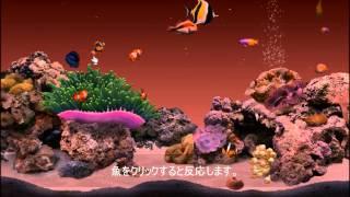 DigiFish Clownfish 遊んでみた