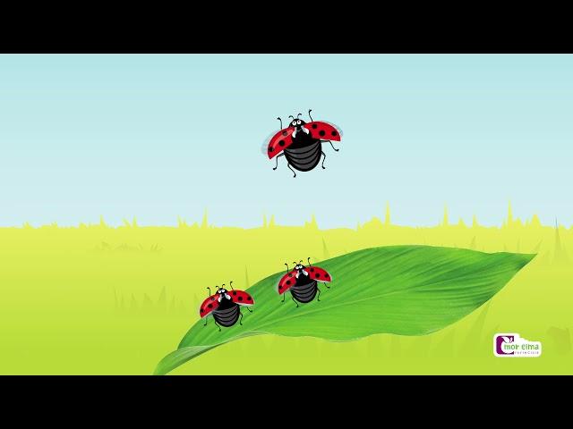 Pani Uğur Böceklerini 5'e Kadar Sayıyor - Okul Öncesi Eğitim - Cici Mici
