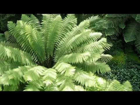Rainforest Ambience 30 Minutes of Relaxing Rainforest Sounds.