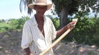 Sunga Sunga: Cooperative Farming in Haiti