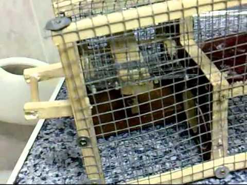 Jaula para pajaros multicaptura sparrow trap youtube for Jaulas para cria de peces