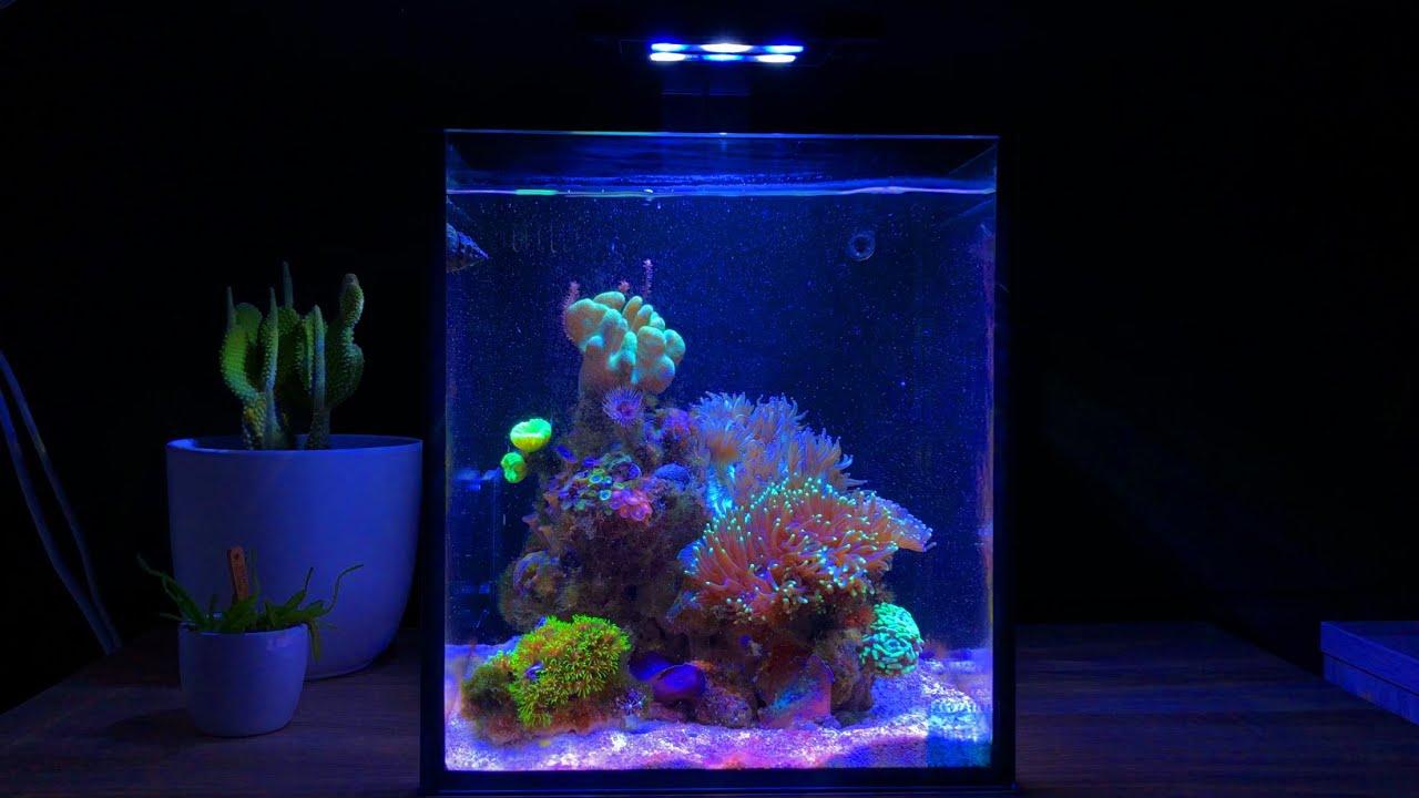Nano Reef Tank Update Month Five (No Skimmer)