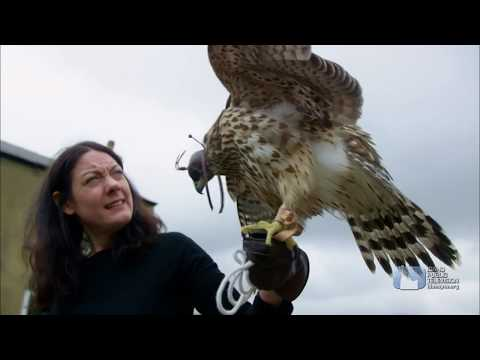Falconer and Author Helen Macdonald on Dialogue