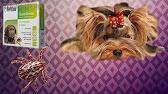 Объявления о продаже собак и щенков в перми на avito.