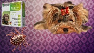 Как вытащить клеща у собаки | В домашних условиях.