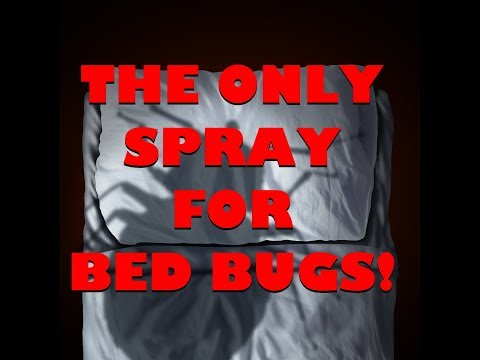 BEST BEDBUG SPRAY! and how to apply it. Label advice