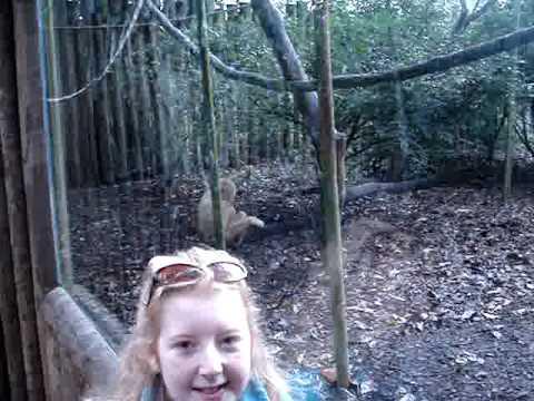 Anna & Curious George the Gibbon