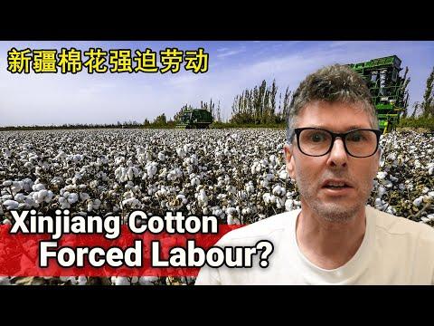 Xinjiang Cotton Forced Labour Regime // 新疆棉花强迫劳动政权