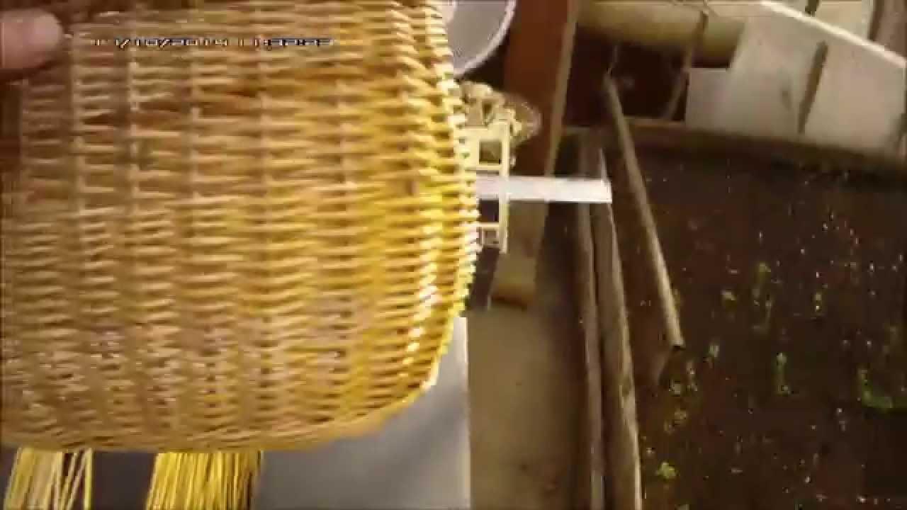 Деревья плетенные из лозы-Trees wickerwork-树的柳条制品. - YouTube