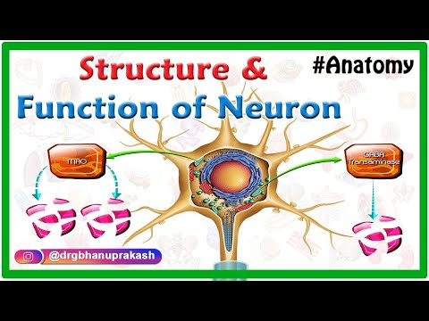Structure and function of Neuron - Animation