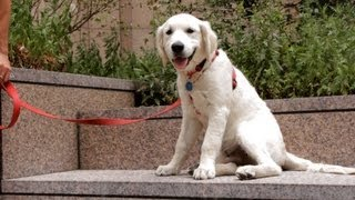 Pick The Right Dog Collar Or Harness | Puppy Care