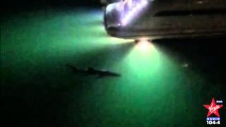 Shark spotted off Palm Jumeirah, Dubai?