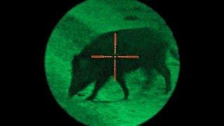 Several wildboar are killed byJan Guillou , a swedish trophy hunter....www.wildlifefilm.com thumbnail