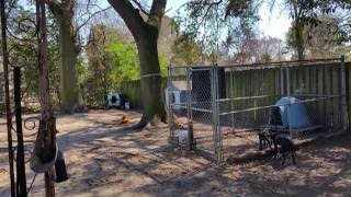 Thompson's Kennels ( Stop The Bull*×$+)