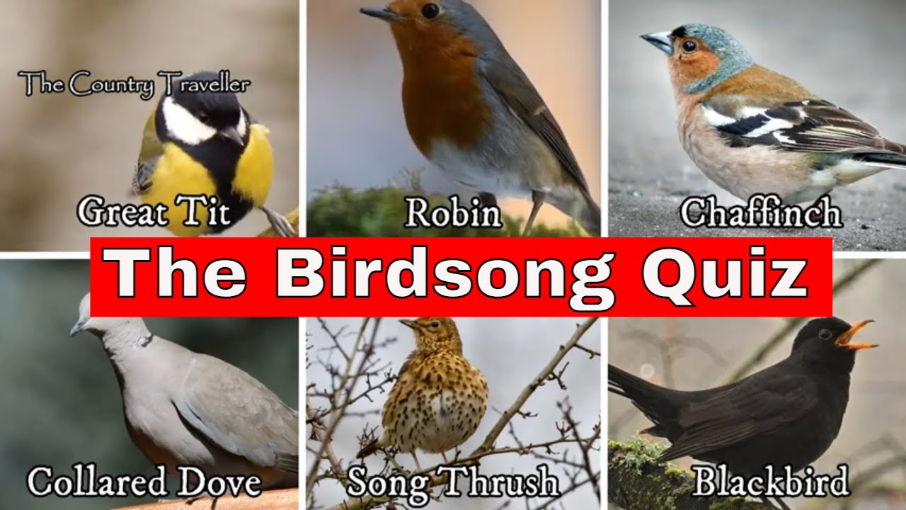The Garden Bird Song Quiz
