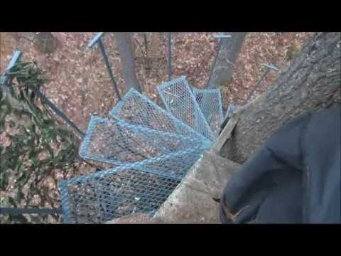 Earl S Tree Spiral Staircase Youtube