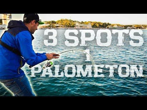 El PEZ  que buscábamos en el spot más INESPERADO | Lured Vlog 41