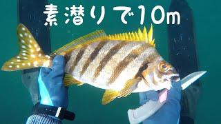 海で素潜りして魚を捕りに行きました。ちょっと濁り気味だったけど、海...